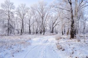 winter-landscape-1352712955hmP