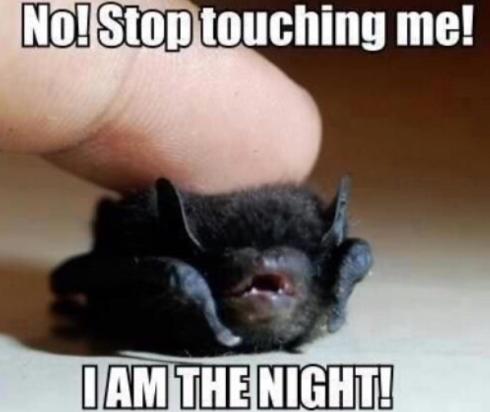 baby bat lol