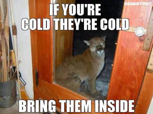 cougar cold lol