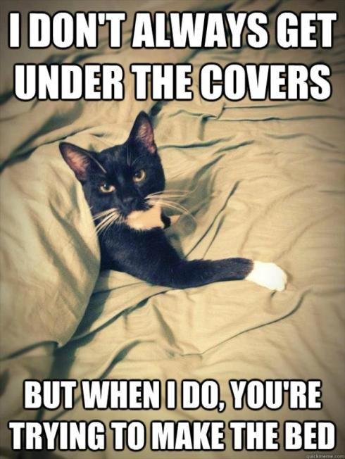 cat-playing-in-the-bed-covers1